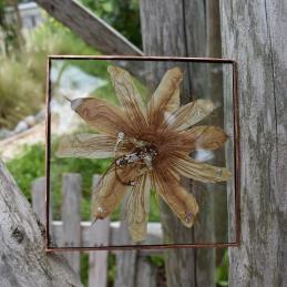 silverwhitepassionflower.2