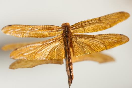 golddragonfly.web